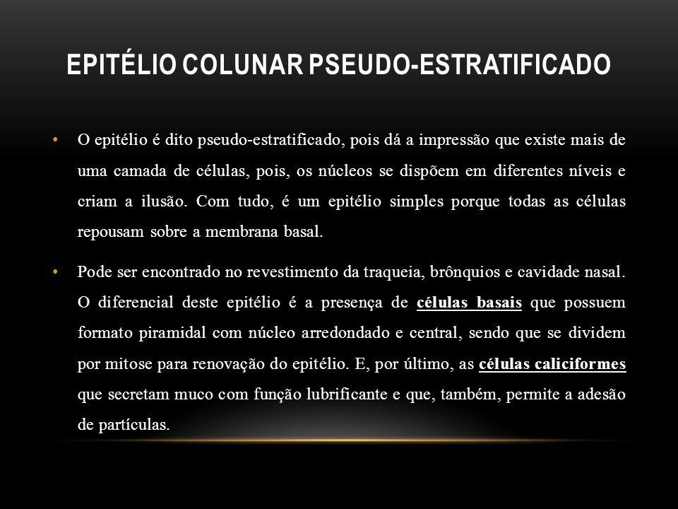 Epitélio Colunar Pseudo-Estratificado