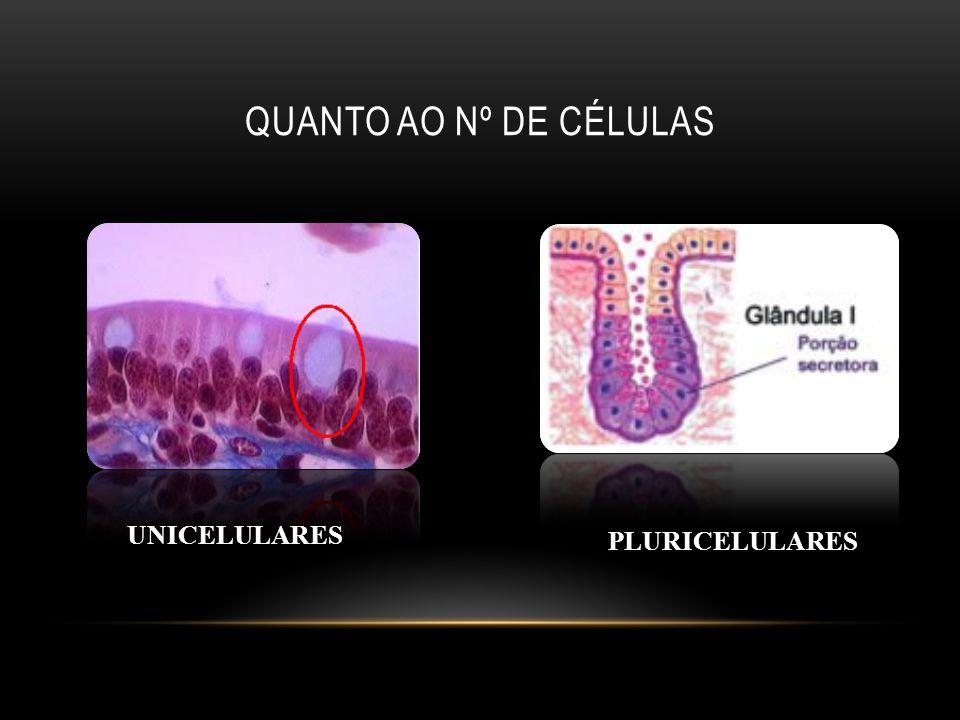Quanto ao nº de células UNICELULARES PLURICELULARES