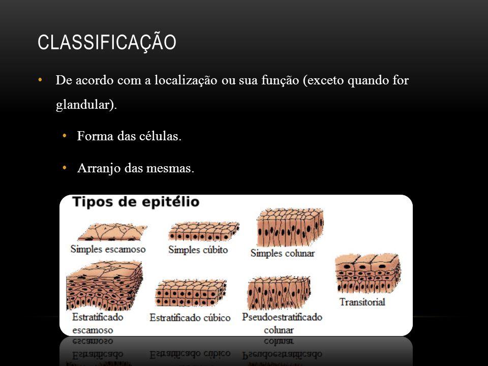 Classificação De acordo com a localização ou sua função (exceto quando for glandular). Forma das células.
