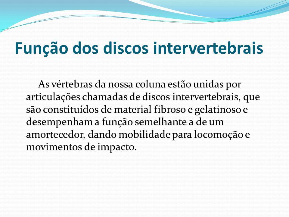 Função dos discos intervertebrais