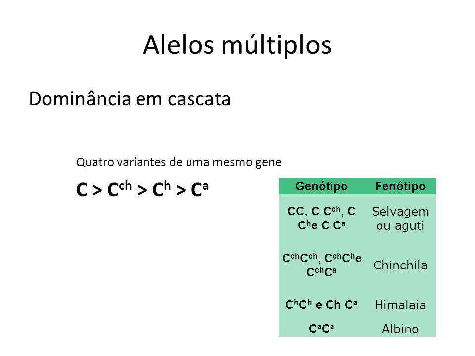 Alelos múltiplos Dominância em cascata Quatro variantes de uma mesmo gene C > Cch > Ch > Ca Genótipo.