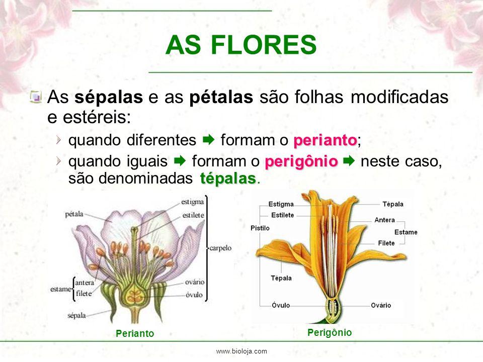 AS FLORES As sépalas e as pétalas são folhas modificadas e estéreis: