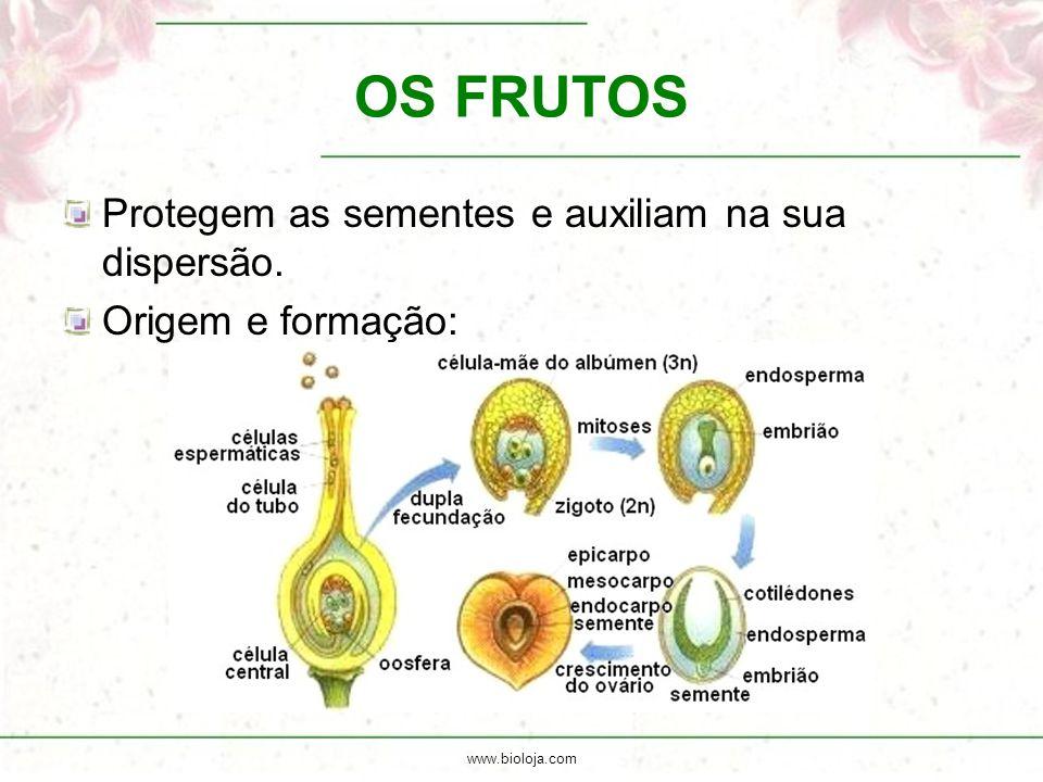 OS FRUTOS Protegem as sementes e auxiliam na sua dispersão.