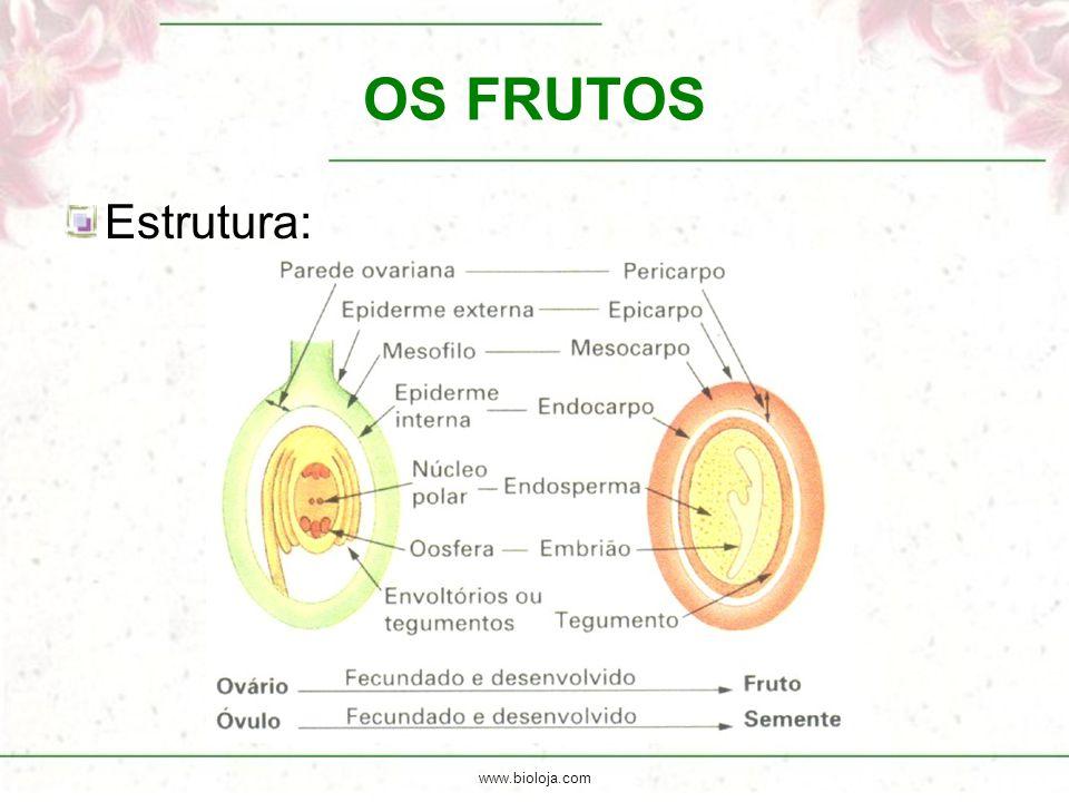 OS FRUTOS Estrutura: www.bioloja.com