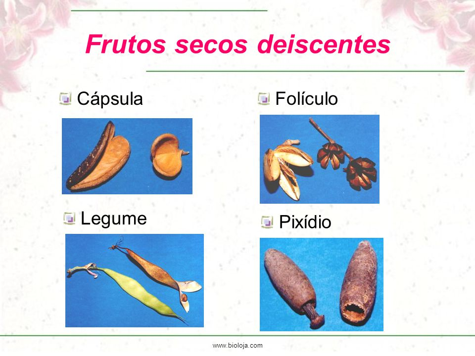 Frutos secos deiscentes