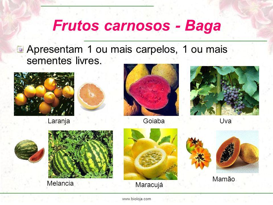 Frutos carnosos - Baga Apresentam 1 ou mais carpelos, 1 ou mais sementes livres. Goiaba. Uva. Laranja.