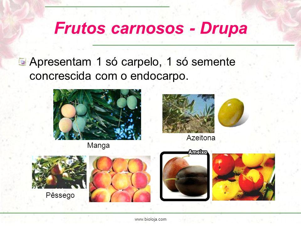 Frutos carnosos - Drupa