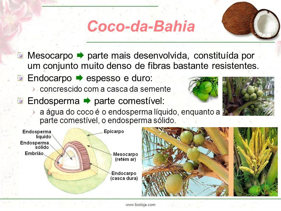 Coco-da-Bahia Mesocarpo  parte mais desenvolvida, constituída por um conjunto muito denso de fibras bastante resistentes.