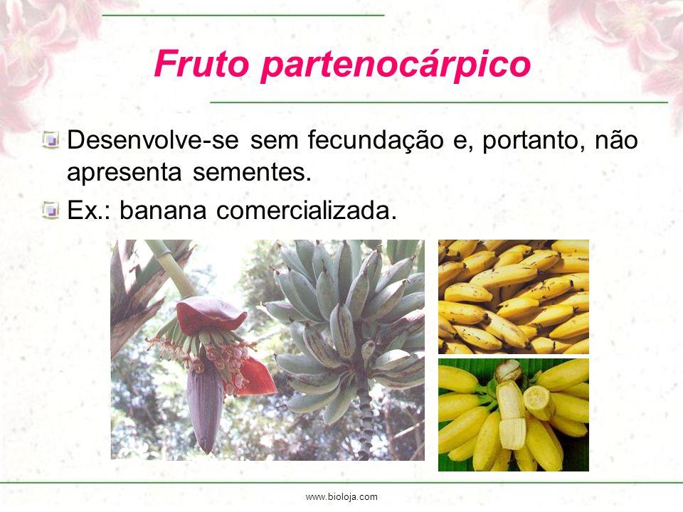 Fruto partenocárpico Desenvolve-se sem fecundação e, portanto, não apresenta sementes. Ex.: banana comercializada.