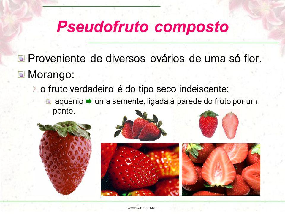 Pseudofruto composto Proveniente de diversos ovários de uma só flor.