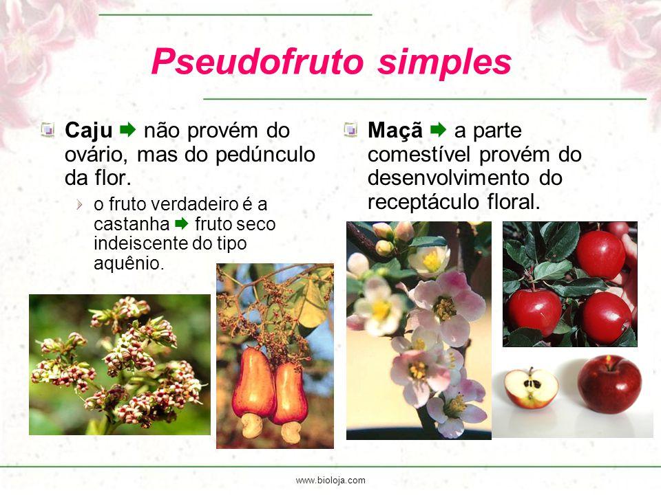 Pseudofruto simples Caju  não provém do ovário, mas do pedúnculo da flor. o fruto verdadeiro é a castanha  fruto seco indeiscente do tipo aquênio.