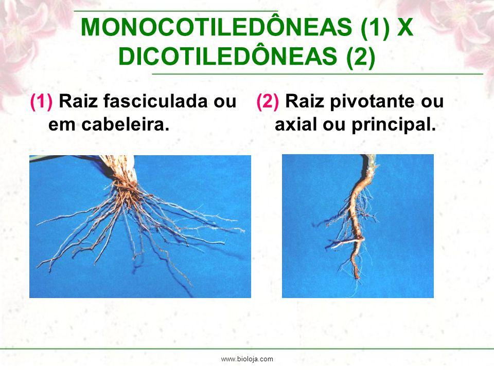 MONOCOTILEDÔNEAS (1) X DICOTILEDÔNEAS (2)