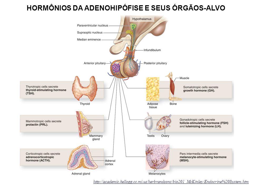 HORMÔNIOS DA ADENOHIPÓFISE E SEUS ÓRGÃOS-ALVO