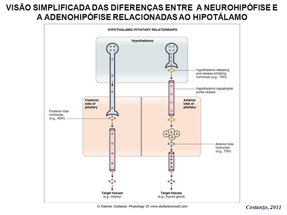 VISÃO SIMPLIFICADA DAS DIFERENÇAS ENTRE A NEUROHIPÓFISE E A ADENOHIPÓFISE RELACIONADAS AO HIPOTÁLAMO