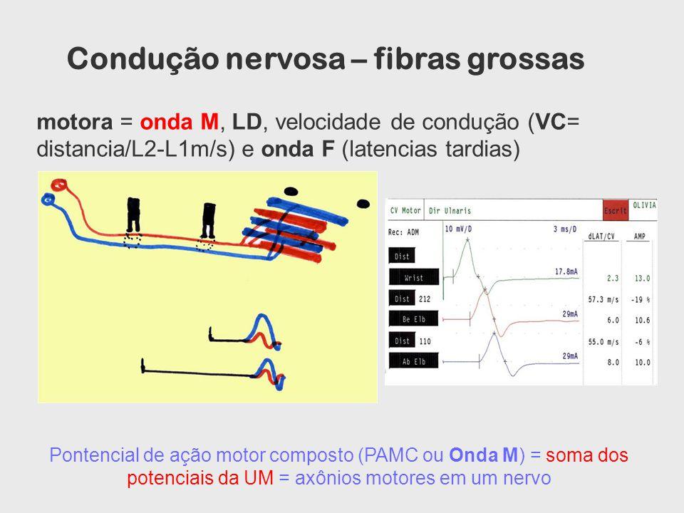 Condução nervosa – fibras grossas