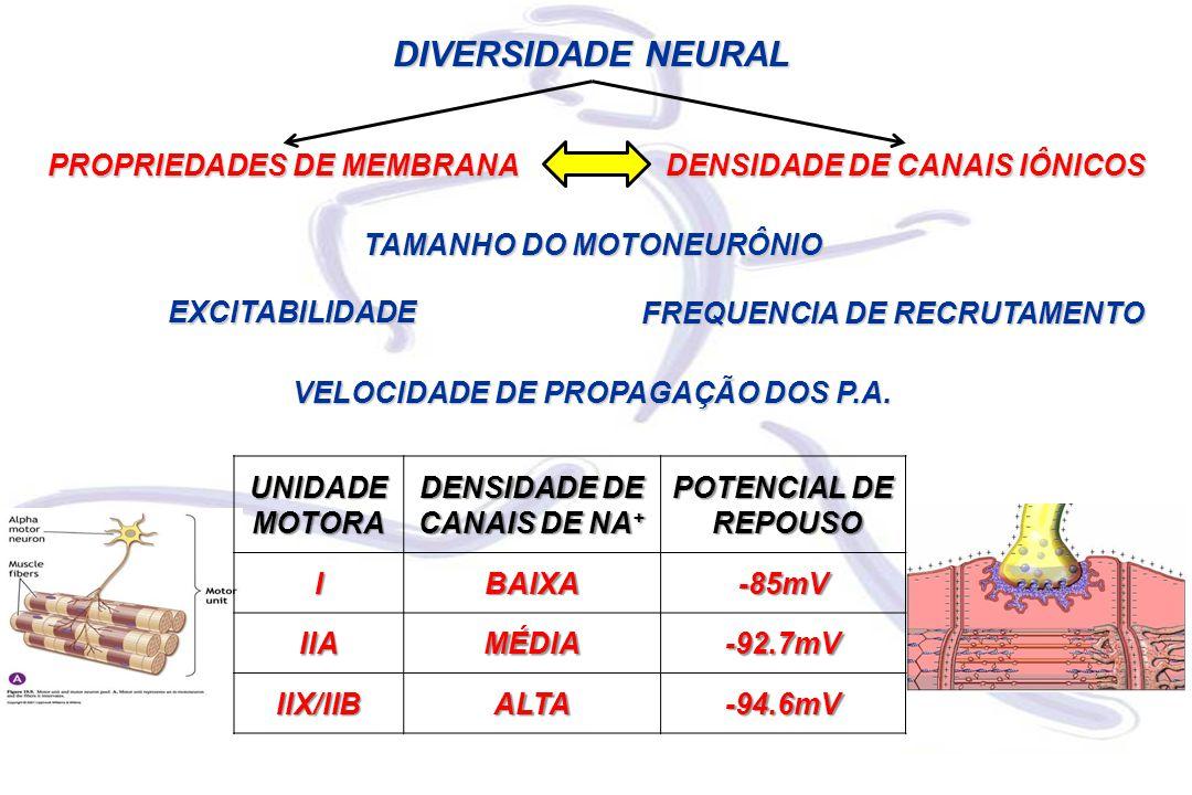 DIVERSIDADE NEURAL PROPRIEDADES DE MEMBRANA