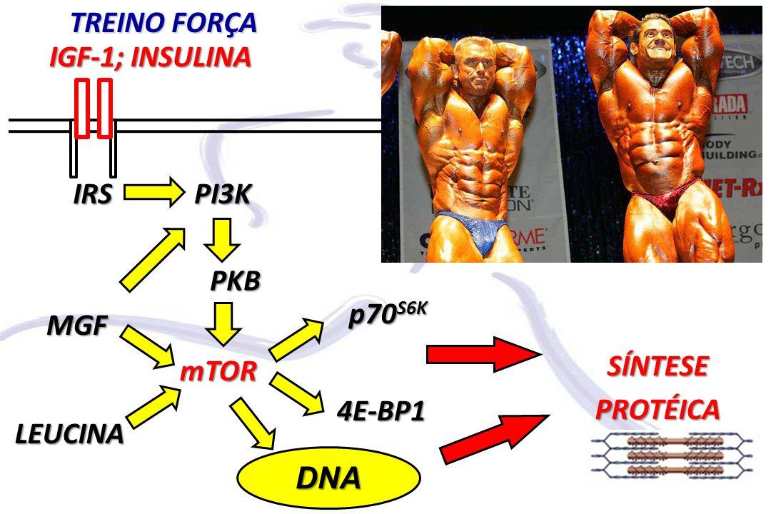 mTOR PI3K PKB IGF-1; INSULINA SÍNTESE PROTÉICA IRS p70S6K 4E-BP1 TREINO FORÇA DNA MGF LEUCINA