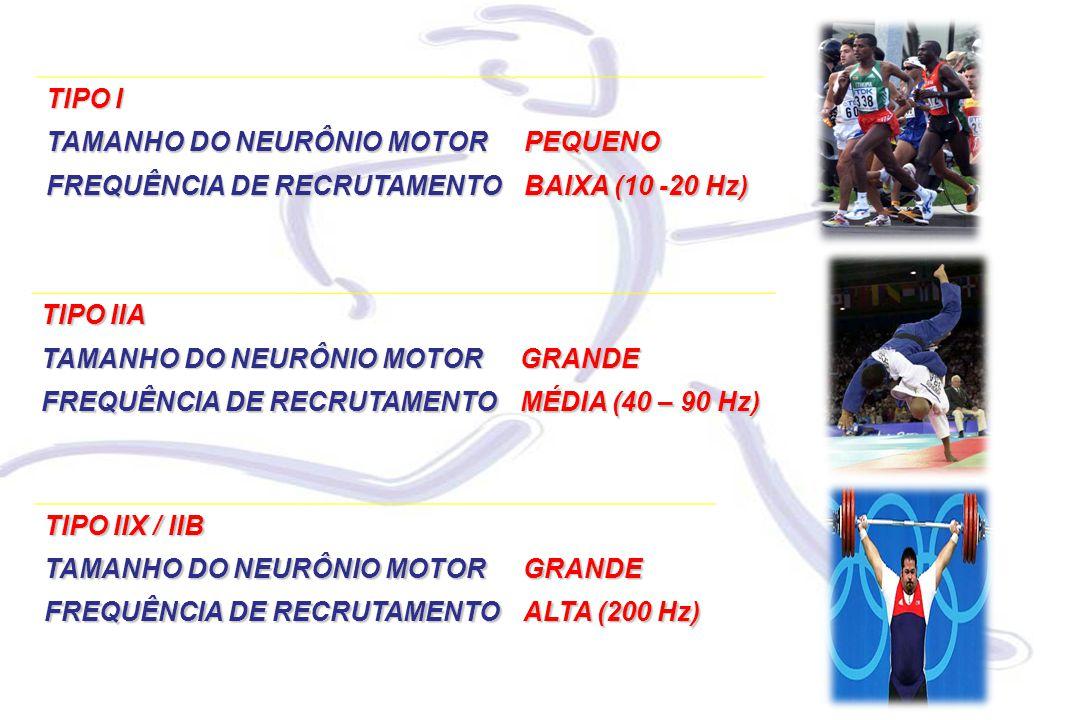 TIPO I TAMANHO DO NEURÔNIO MOTOR. PEQUENO. FREQUÊNCIA DE RECRUTAMENTO. BAIXA (10 -20 Hz) TIPO IIA.