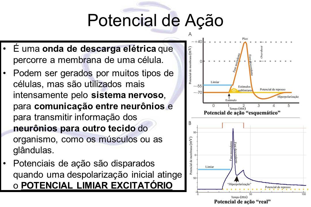 Potencial de Ação É uma onda de descarga elétrica que percorre a membrana de uma célula.