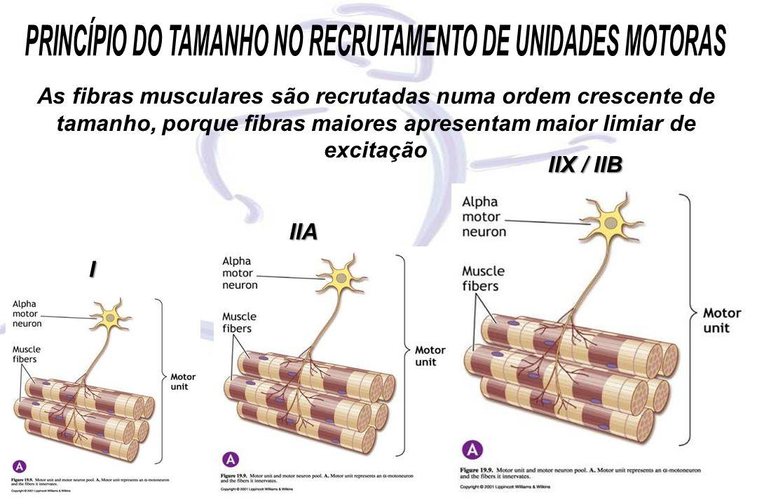 PRINCÍPIO DO TAMANHO NO RECRUTAMENTO DE UNIDADES MOTORAS