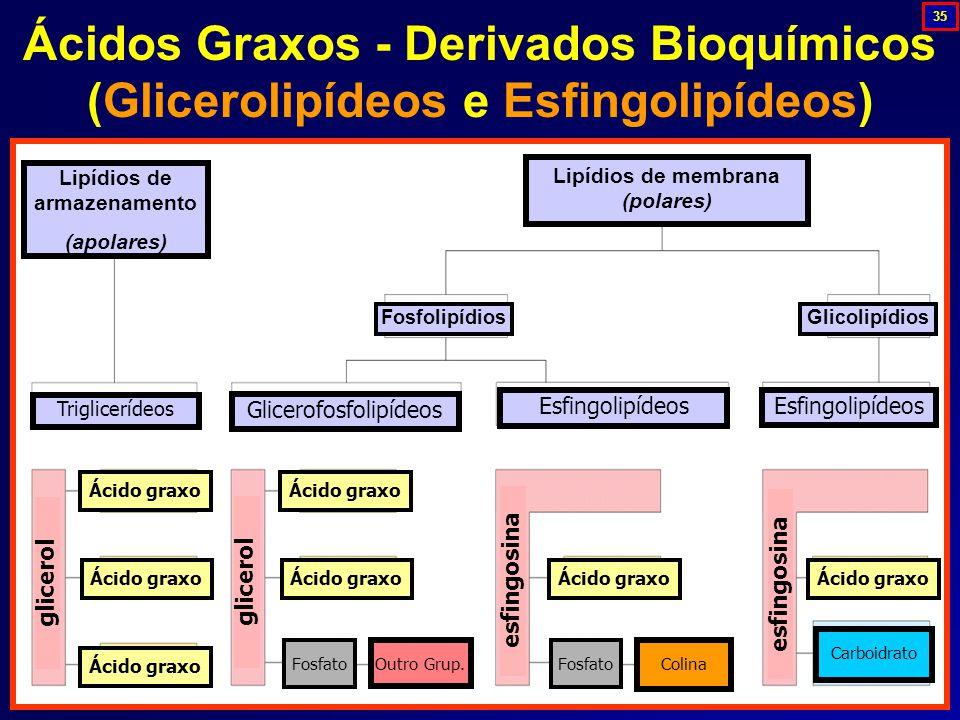 Ácidos Graxos - Derivados Bioquímicos