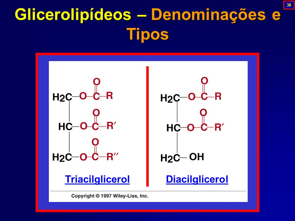 Glicerolipídeos – Denominações e Tipos