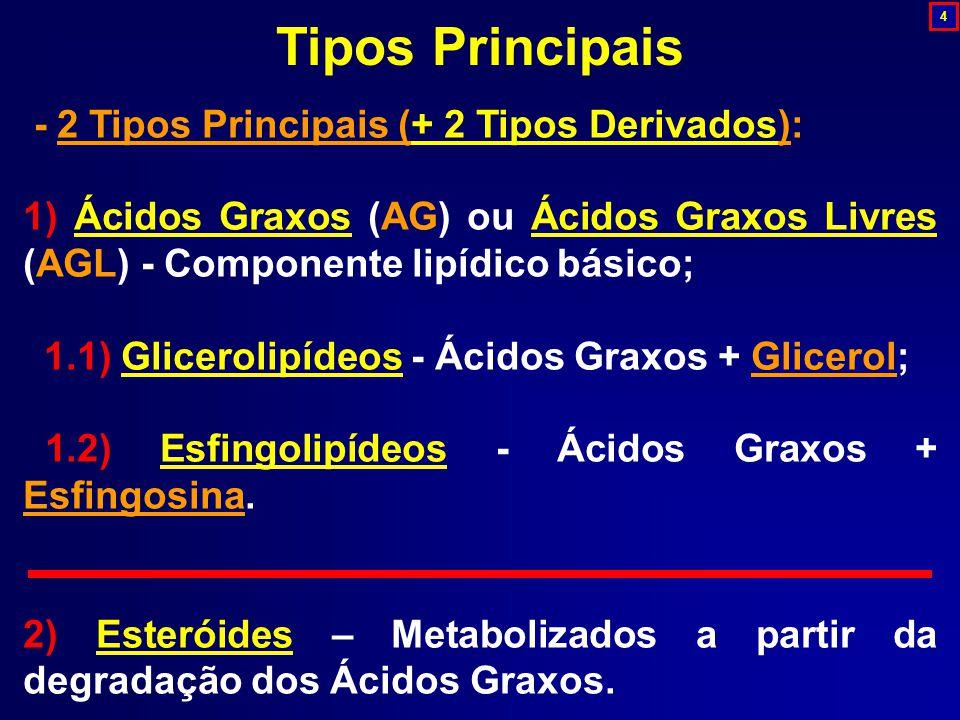 Tipos Principais - 2 Tipos Principais (+ 2 Tipos Derivados):