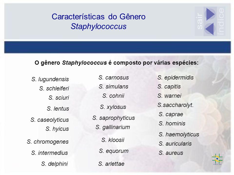 O gênero Staphylococcus é composto por várias espécies: