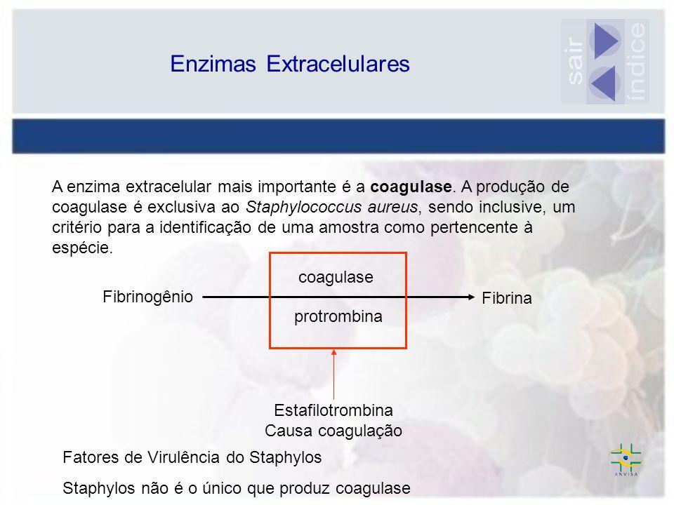 Enzimas Extracelulares