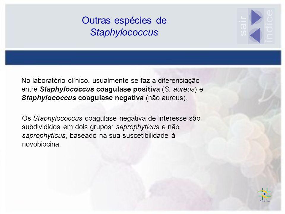 índice sair Outras espécies de Staphylococcus