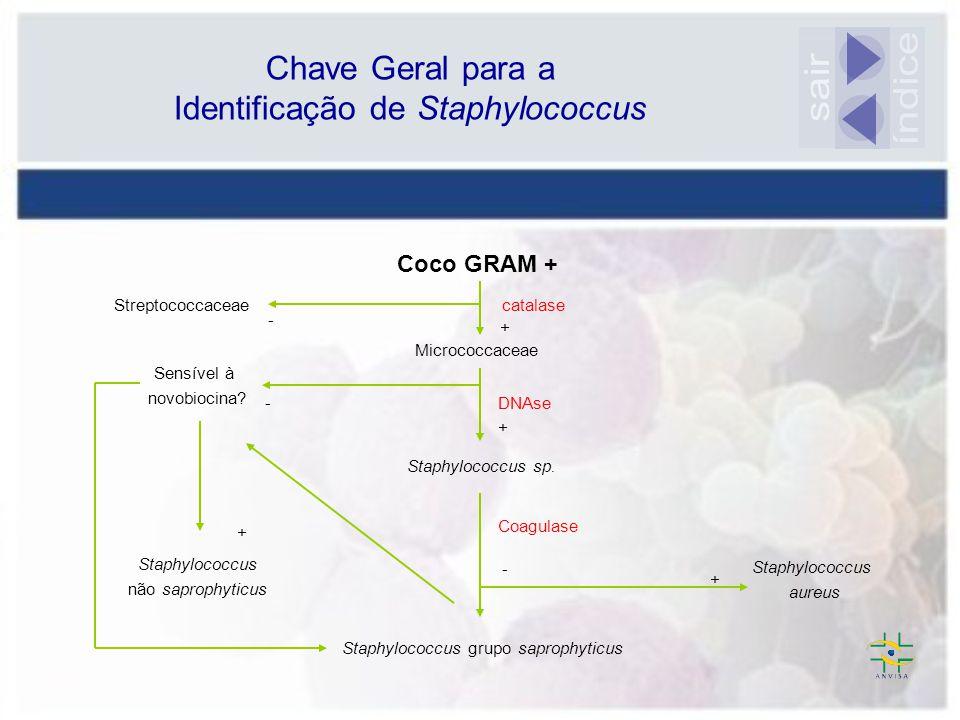 índice sair Chave Geral para a Identificação de Staphylococcus