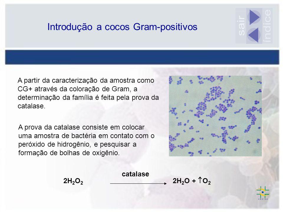 Introdução a cocos Gram-positivos
