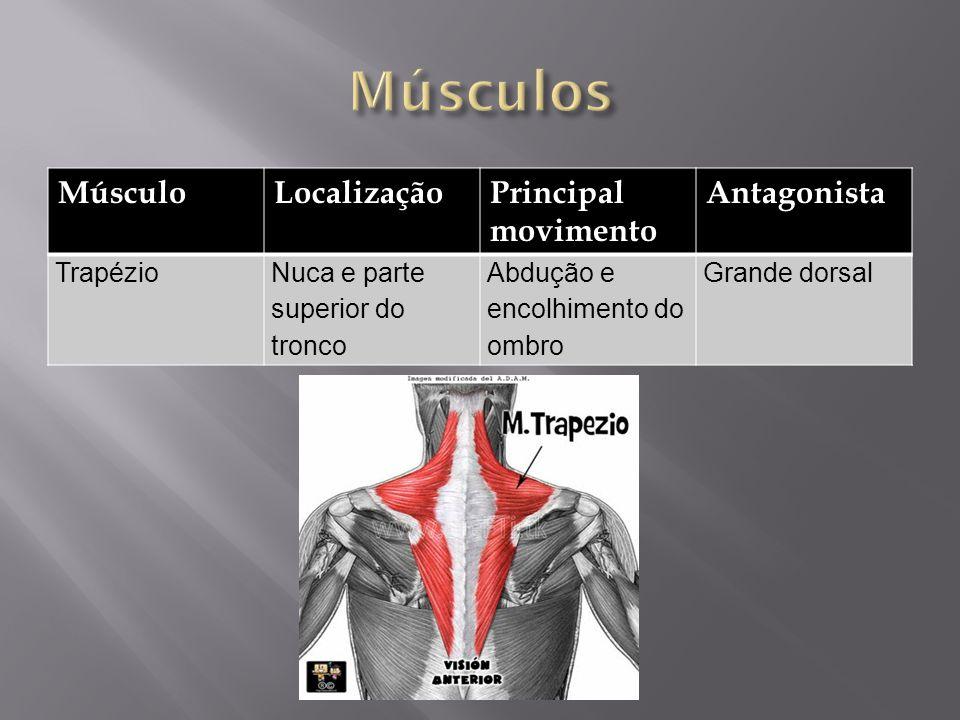 Músculos Músculo Localização Principal movimento Antagonista Trapézio
