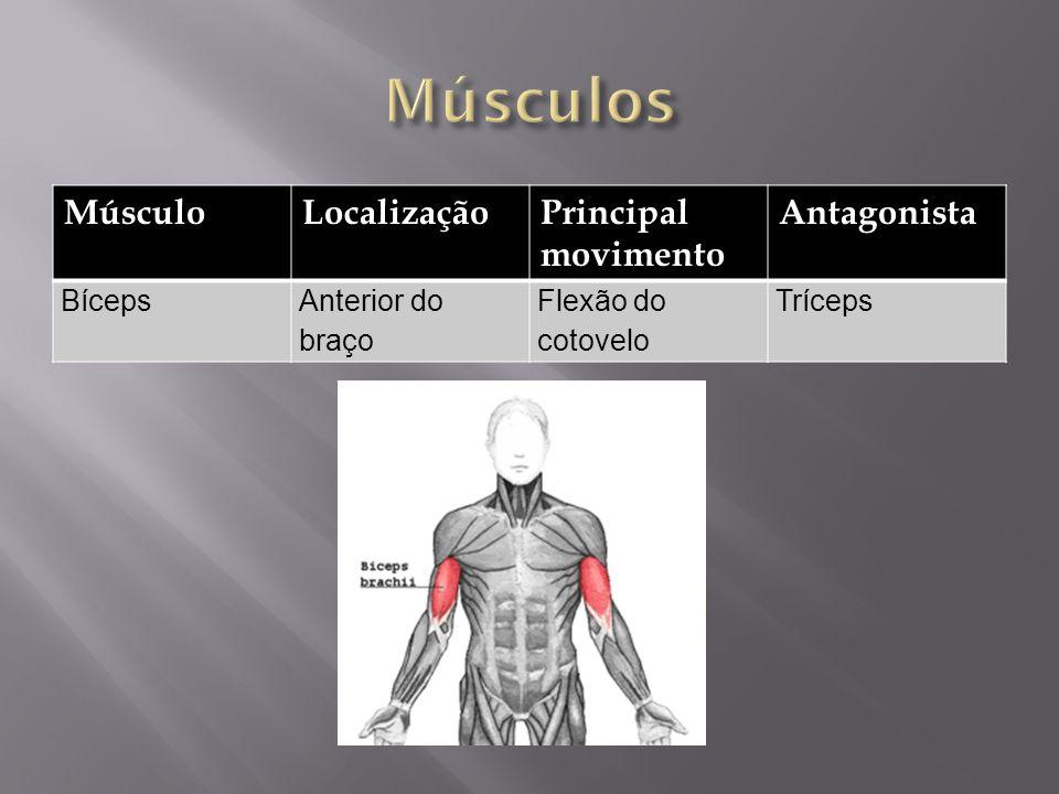 Músculos Músculo Localização Principal movimento Antagonista Bíceps