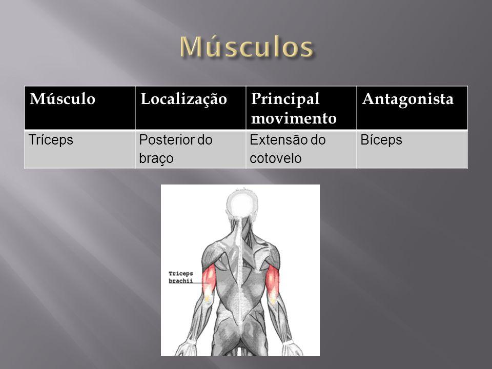 Músculos Músculo Localização Principal movimento Antagonista Tríceps