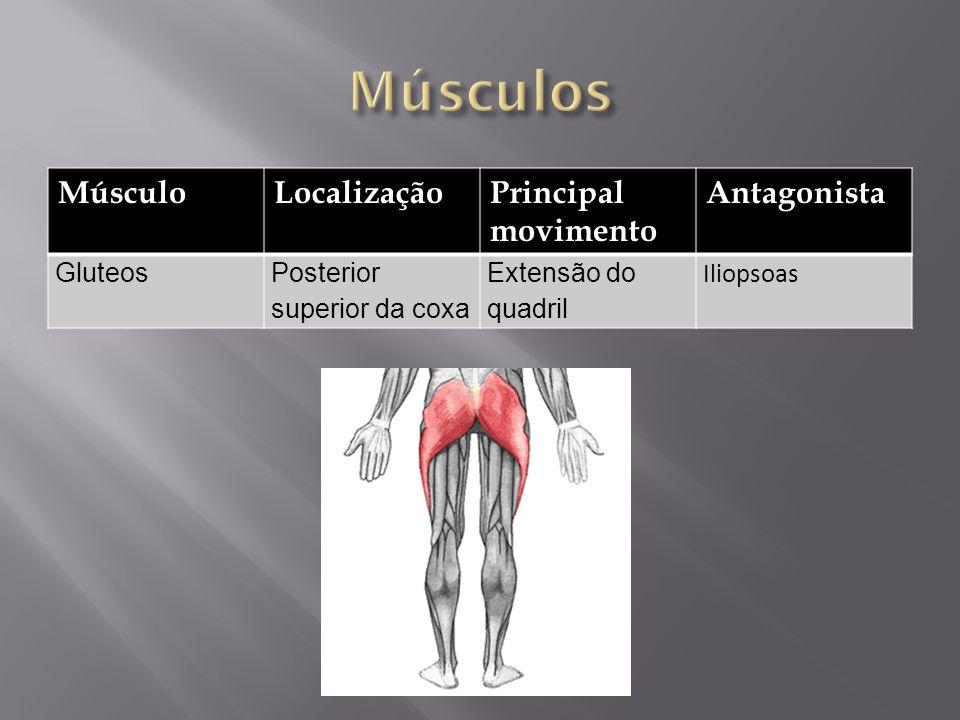 Músculos Músculo Localização Principal movimento Antagonista Gluteos