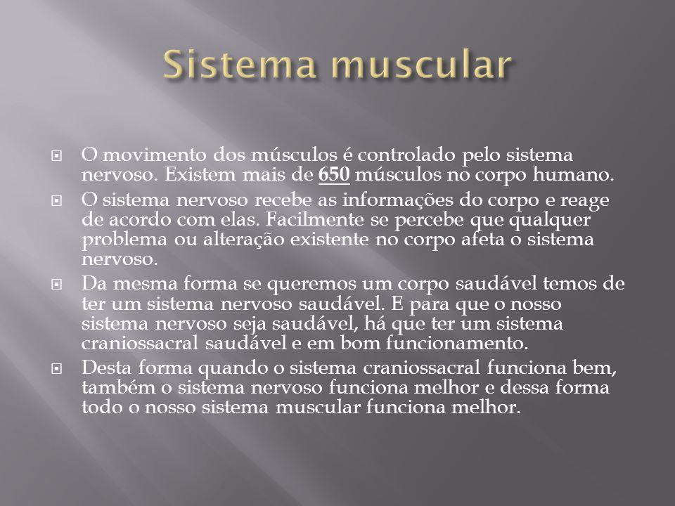 Sistema muscular O movimento dos músculos é controlado pelo sistema nervoso. Existem mais de 650 músculos no corpo humano.