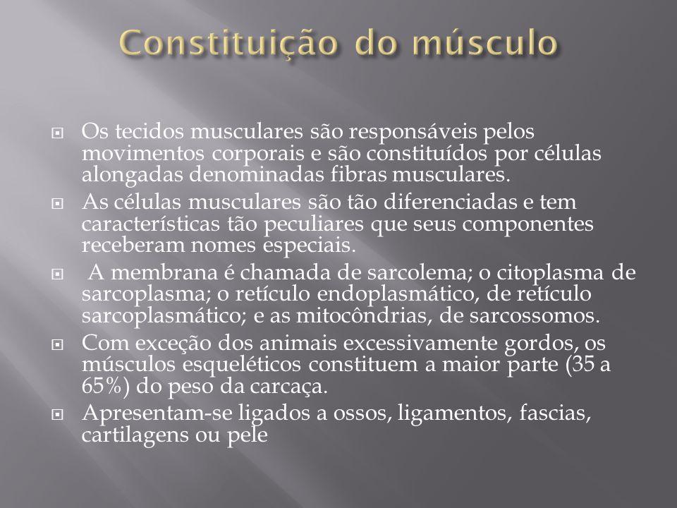 Constituição do músculo