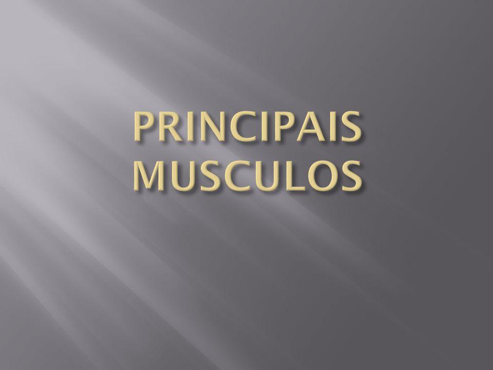 PRINCIPAIS MUSCULOS