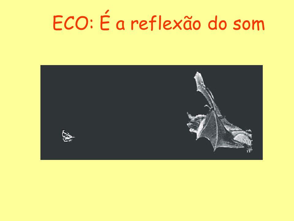 ECO: É a reflexão do som