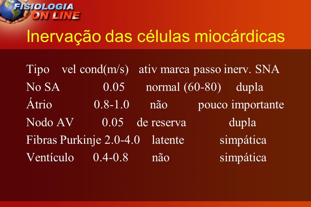 Inervação das células miocárdicas