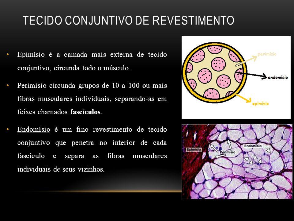 Tecido conjuntivo de revestimento