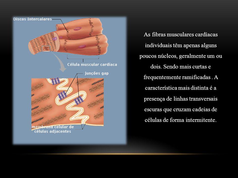 As fibras musculares cardíacas individuais têm apenas alguns poucos núcleos, geralmente um ou dois.