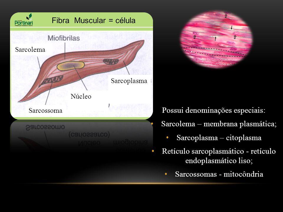Possui denominações especiais: Sarcolema – membrana plasmática;