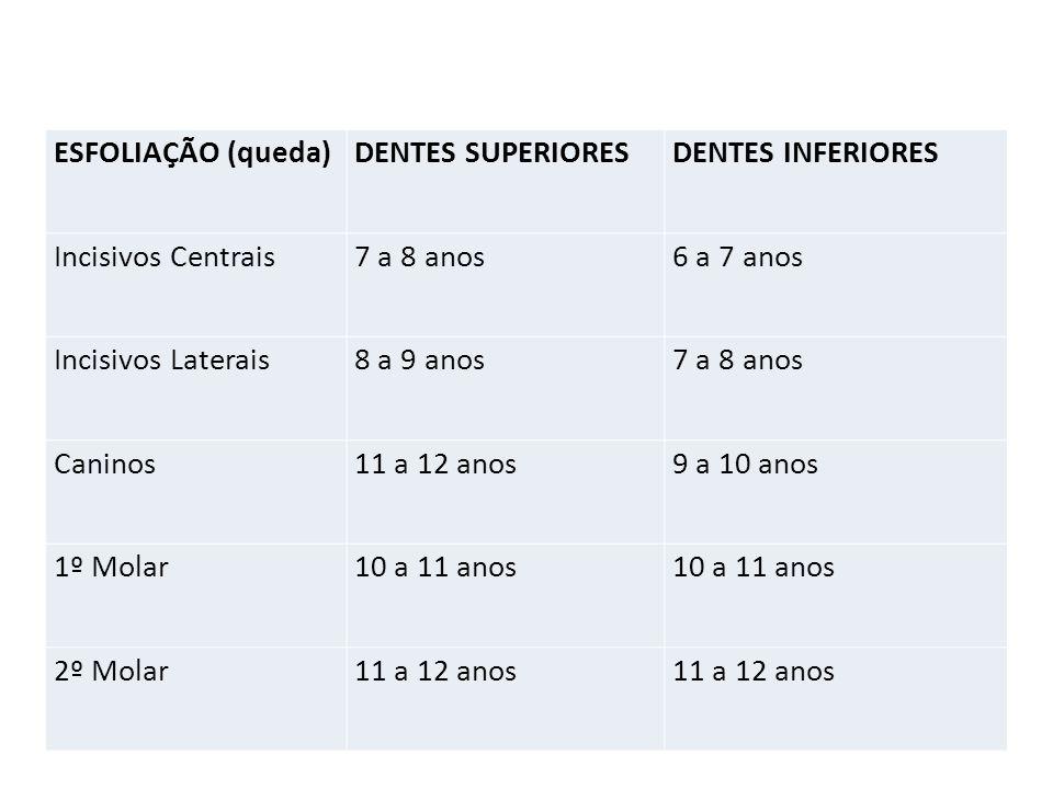 ESFOLIAÇÃO (queda) DENTES SUPERIORES. DENTES INFERIORES. Incisivos Centrais. 7 a 8 anos. 6 a 7 anos.