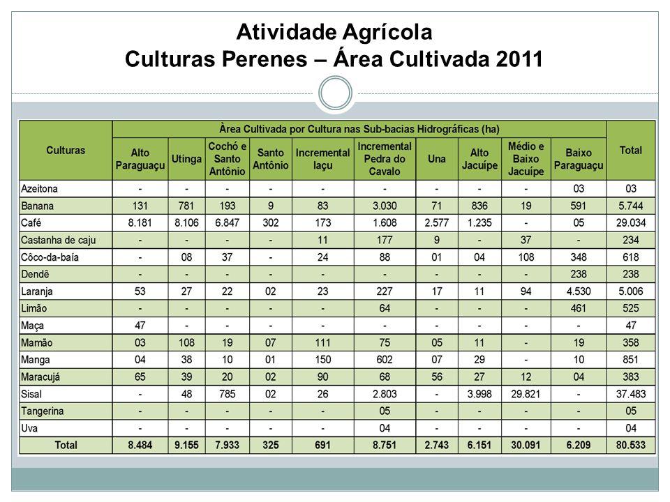 Atividade Agrícola Culturas Perenes – Área Cultivada 2011