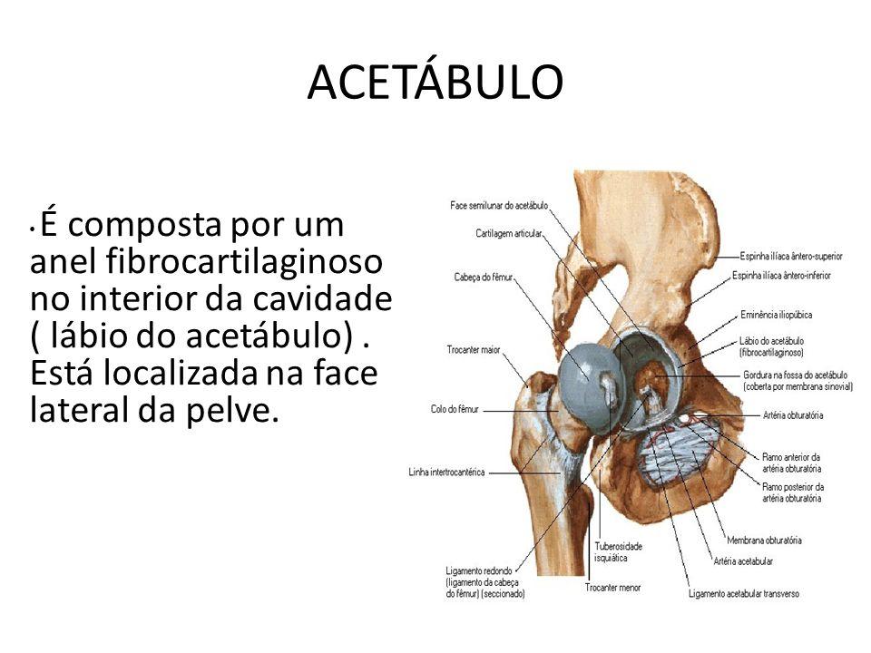 ACETÁBULO É composta por um anel fibrocartilaginoso no interior da cavidade ( lábio do acetábulo) .
