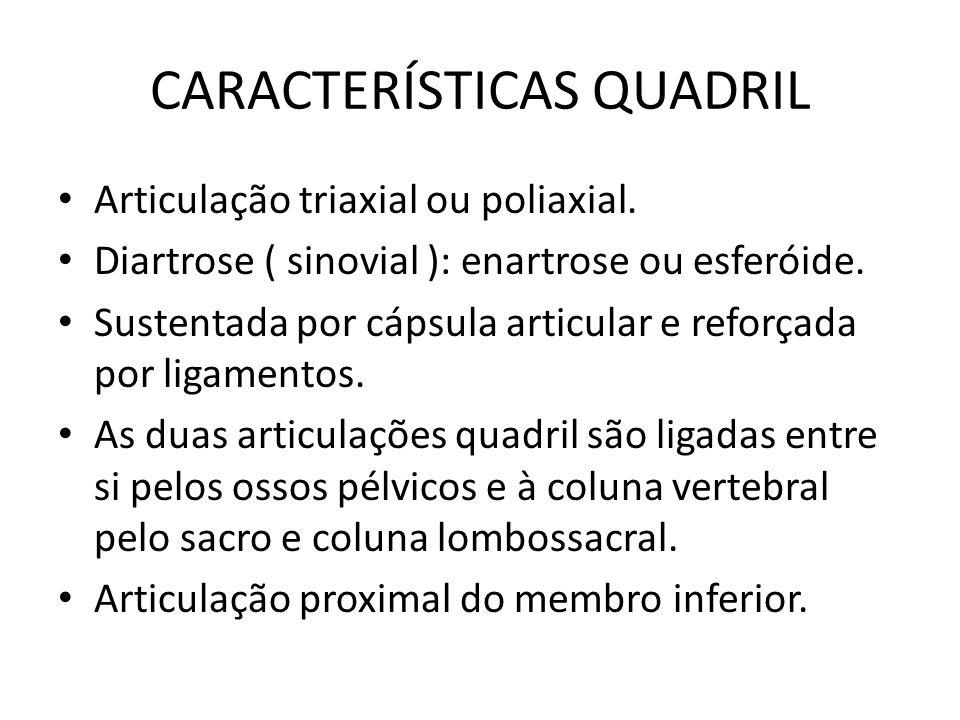 CARACTERÍSTICAS QUADRIL