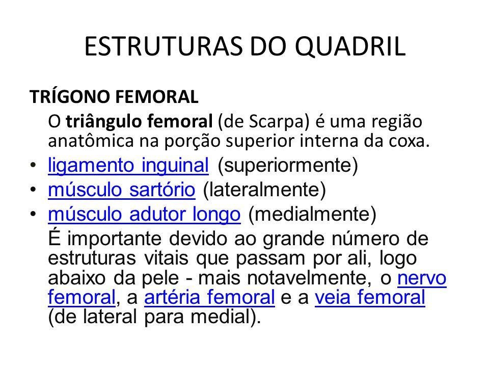 ESTRUTURAS DO QUADRIL TRÍGONO FEMORAL