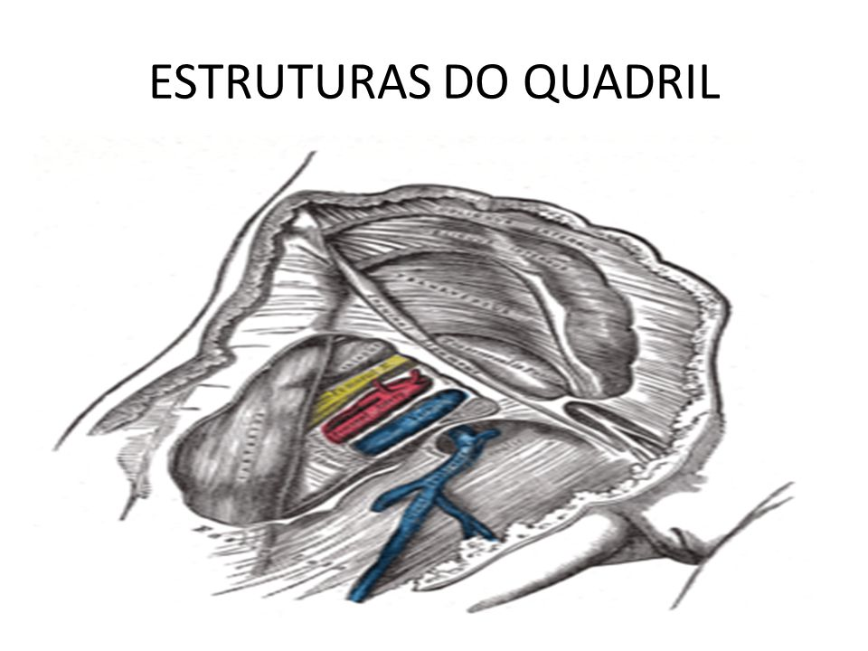 ESTRUTURAS DO QUADRIL